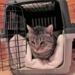 Ihre Katze sollte sich in der Transportbox wohl fühlen