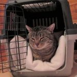 Die Katze sollte sich in ihrer Box rundum wohl fühlen